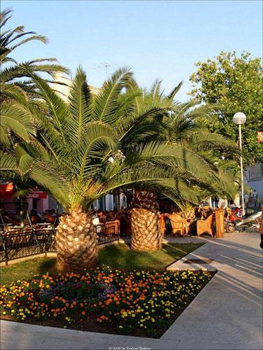Mali Lusinj green island